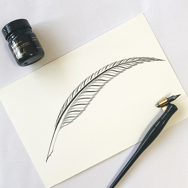 Step-By-Step Process to Create a Quill Flourish